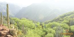 Tehuacán-Cuicatlán