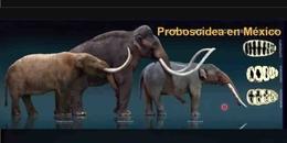 La interacción entre mamuts y humanos