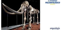 Los museos y la paleontología en México