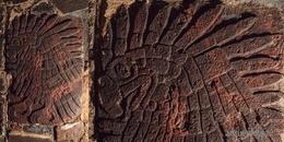 Un bajorrelieve de águila real