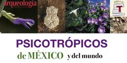 Tipos y efectos de las plantas mágicas de México