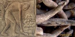Los olmecas, los mayas y la yuca